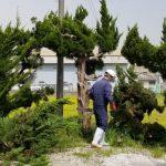 当社管理地の木を伐採しました!