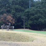 ゴルフコンペ Winter-Cup